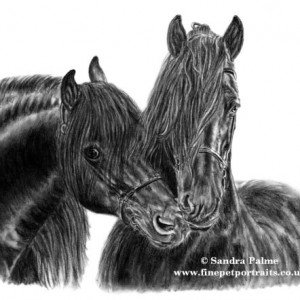 Friesian stallions Tsjerk  & Feitse drawing