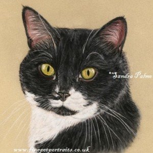 Black and white Cat drawing in pastels