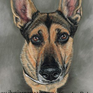 German Shepherd pastel