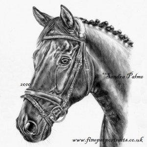 Horse Gallery Charcoal
