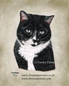 Cat Whiskers Portrait