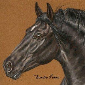 Black Stallion Portrait ref. photo slawik.com