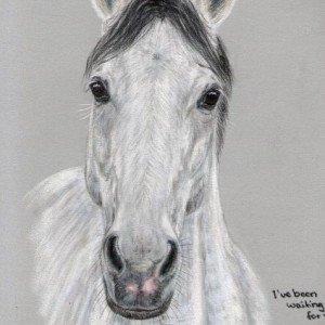 Grey Horse Portrait
