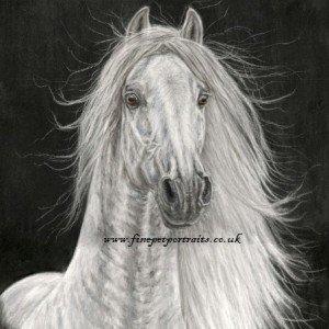 Grey Spanish stallion ref. photo slawik.com