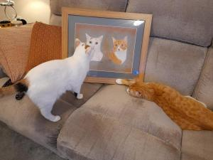 Cats Holly and Woody admiring their portrait