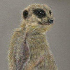 Meerkat pastel