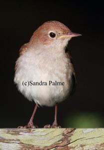 British Bird Photos by Sandra Palme