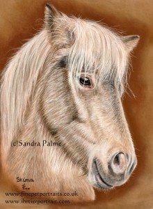 Icelandic Horse Mare pastel portrait