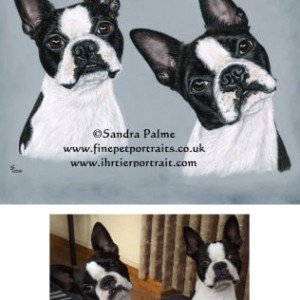 dog portrait commission