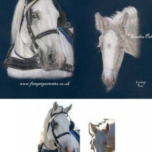 horse portrait reference photo