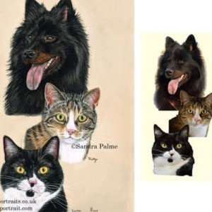 dog cats portrait from photos