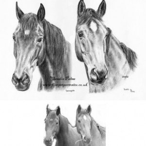 horse drawing from photo