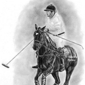 Polo Pony portrait drawing