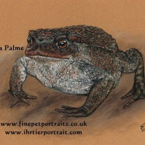 Toad painting